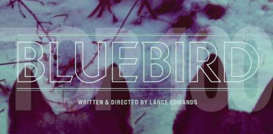 bluebird louisa krause 